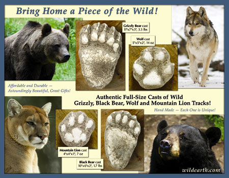 brochure for sale of casts of animal paw prints